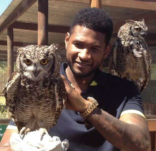 Usher owl  Hot Shots: Ushers Wild Life Adventure In South Africa