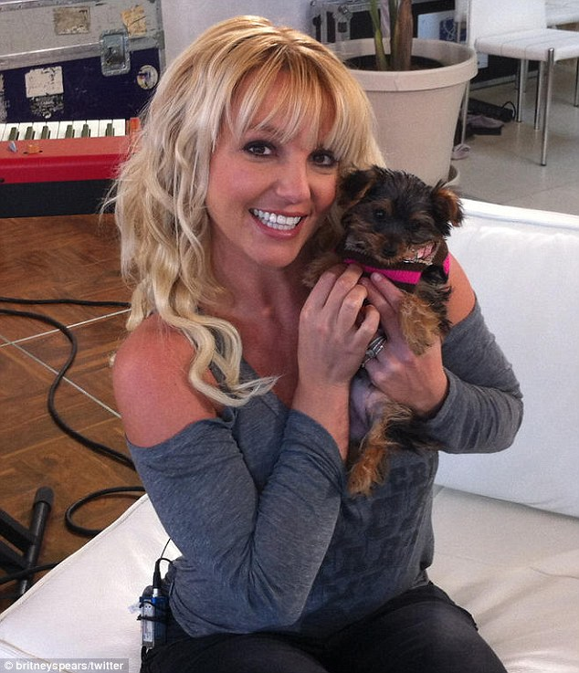 BRITNEY SPEARS NEW PUPPY