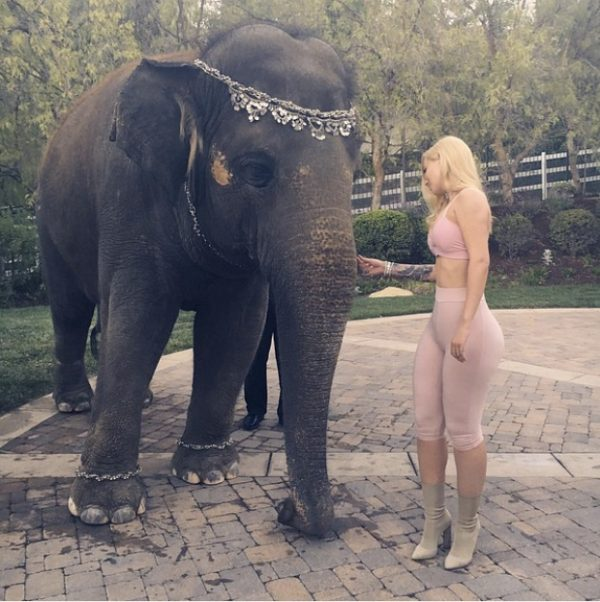 iggy-azalea-pose-elephant-petition-wildlife-thatgrapejuice