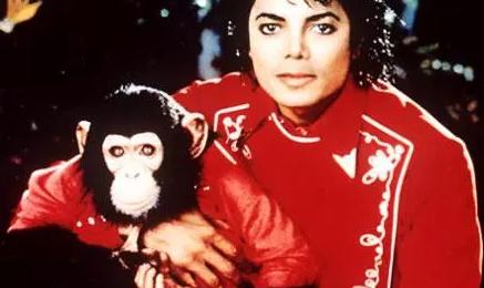 Michael Jackson's Monkey Nabs Movie Deal