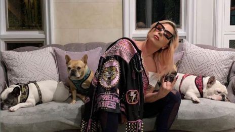 Lady Gaga's Dogs Safely Recovered Following Abduction
